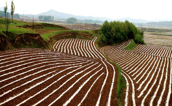 山西:加强农业品牌建设 推动功能农业发展