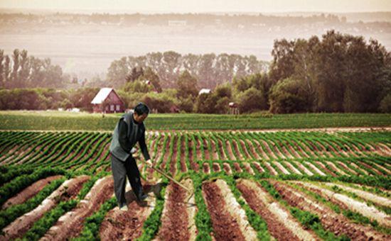 轮作休耕会减少农民种植收入?中央将安排25.6亿元资金支持