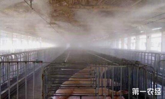 猪场降温设备:全自动喷雾系统 - 养猪场 - 第一农经网