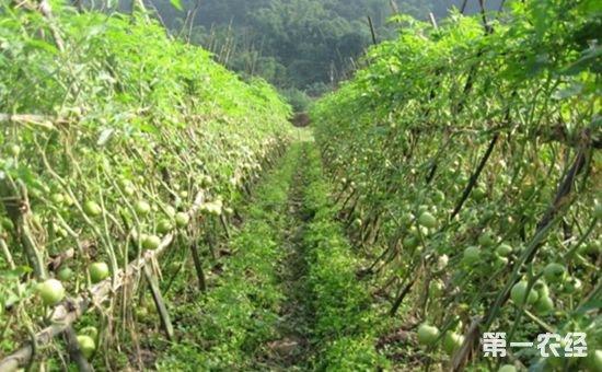 贵州:到2019年蔬菜种植面积将达到2000万亩(次)
