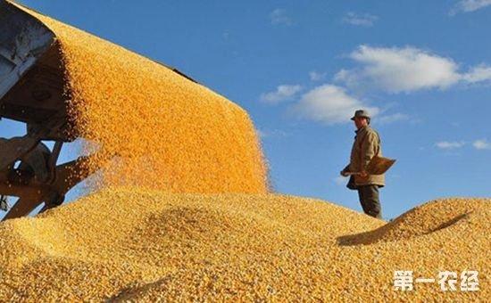 我国粮食产业实现工业总产值2.8万亿元 同比增长13.3%