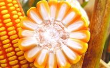 <b>种子价格将上涨?来看看种子市场行情预测分析</b>