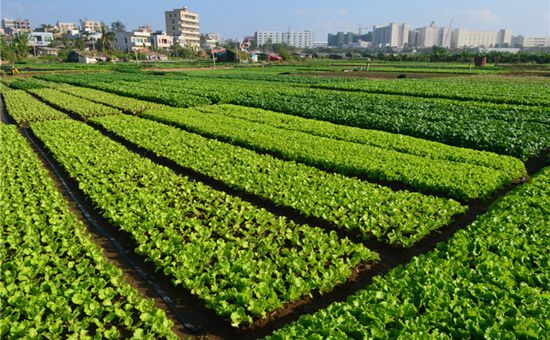 北京怀柔区今年继续实行菜田补贴政策 来看看都补贴了什么!