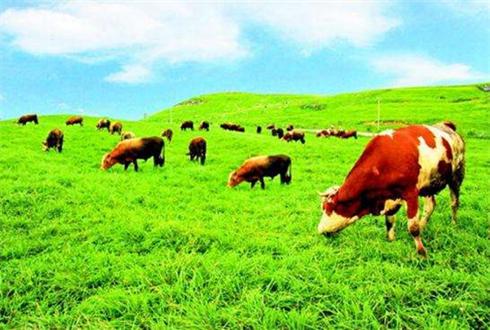 陕西山阳:生态产业链带领乡亲脱贫致富