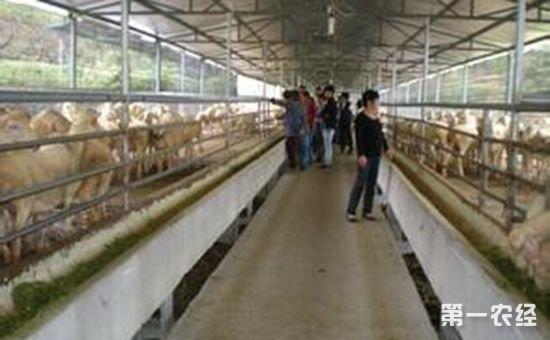 浙江宁波:实施畜牧五大工程 推动畜牧业绿色发展