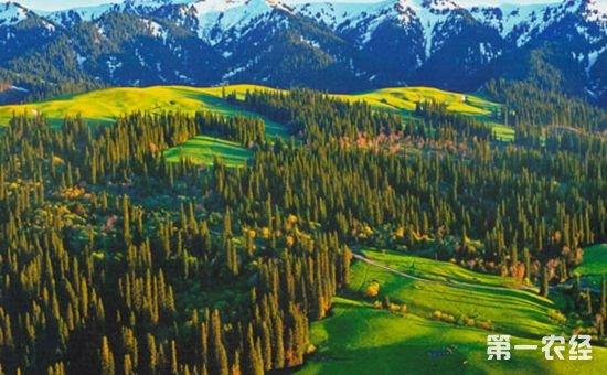 林业援疆:推进南疆四地州深度脱贫攻坚