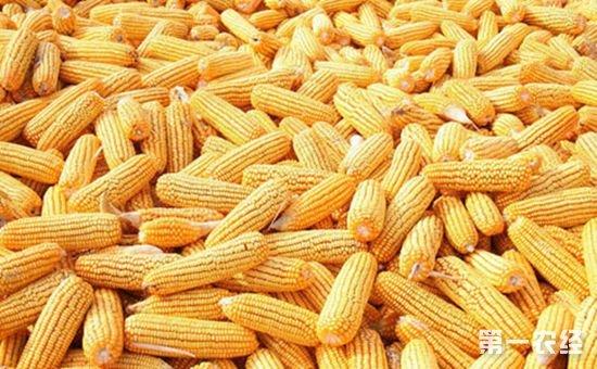 农业部出台新政 将鼓励东北地区发展养殖业