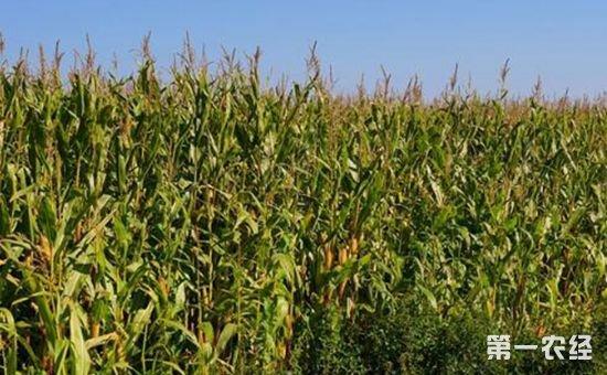 解读《关于建立粮食生产功能区和重要农产品生产保护区的指导意见》