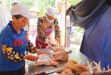 肉鸡养殖迎来新面貌 寻得脱贫致富捷径