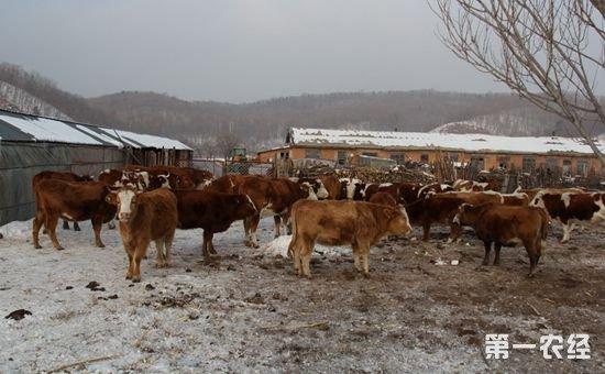 黑龙江:加快转变生产方式 引领畜牧产业提档升级