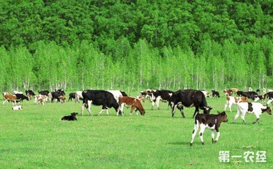 山东聊城市:实现畜牧产业与生态文明并举