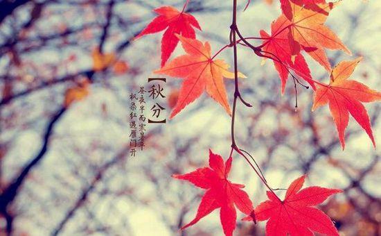 明日秋分将至 我国大部分地区进入秋收季