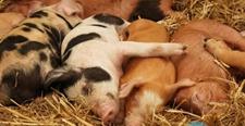 猪舍日常如何清洁?猪舍日常清洁方法