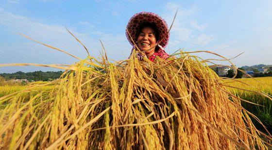 农业部:召开全国秋冬种工作视频会议 部署安排秋冬种工作