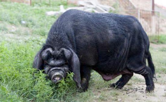 <b>2017中国百强农产品区域公用品牌名单发布 青海牦牛肉入选</b>