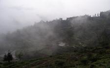 马边云雾茶产自哪里?马边云雾茶的生长环境如何?