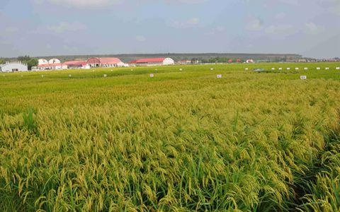 土地托管还是土地流转?农民该如何选择?