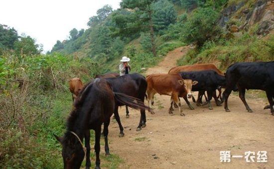 江苏省不断推动畜牧产业转型发展