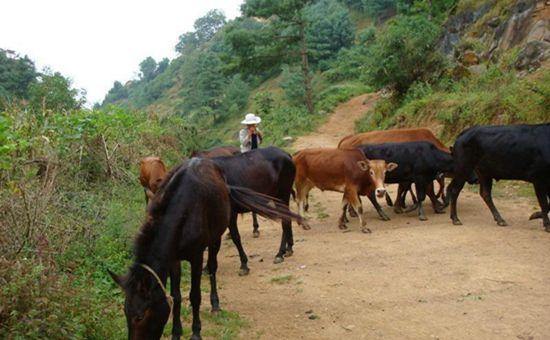 江苏:不断推动畜牧产业转型发展 促进畜牧业绿色发展