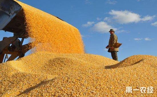 国家将继续实行小麦最低收购价政策