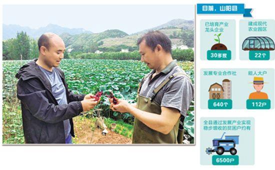 """陕西山阳县:创新推行""""三带三创""""产业扶贫模式"""