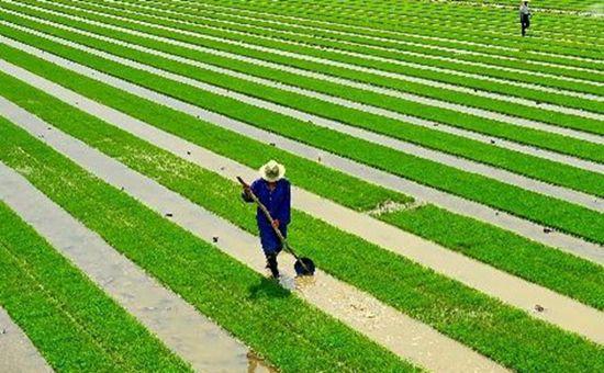 湖北:新型农业经营主体培育效果显著 同比增长15.6%