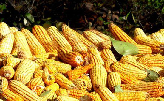 今年国家收粮政策有变 农民需密切关注这几点变化!