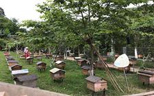 养蜂专业户钟亮生:林下经济东风来 残疾林农也能致富