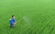 <b>法国政府将在2022年前全面禁用草甘膦</b>