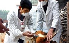<b>禽类疫苗:新苗推广或将改变竞争格局</b>
