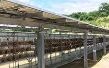 """<b>日本尝试""""太阳能+农业""""新经济:在太阳能电站养殖木耳</b>"""