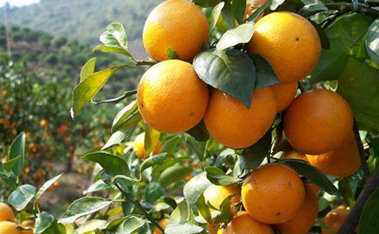 农业部下发《2017年秋冬季主要农作物科学施肥指导意见》