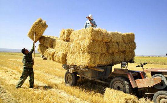 <b>2017低碳循环农业创新发展论坛在吉林长春召开</b>