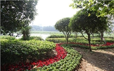 国庆七天去哪儿玩?武汉50万盆鲜花等候游客光临