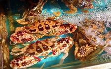 海蟹的种类有那些?