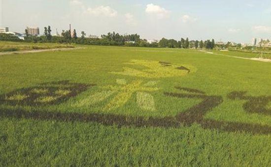 广东麻涌镇:古梅西园农业园已完工 正式对民众免费开放