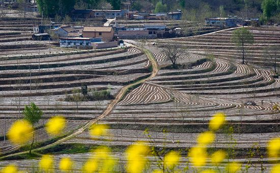 陕西:大力推进农业供给侧结构性改革 不断加快农业科技创新应用步伐