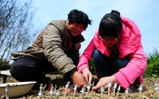 大学生村官孔维玲:带领村民脱贫致富是她的担当