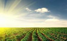 """农业农村发展呈现""""六新""""好形势 农业供给侧改革打开新局面"""