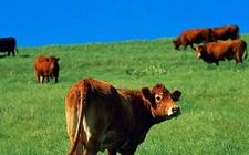 江苏:提升畜牧业绿色发展水平 加快畜牧业转型升级
