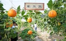 甘肃:休闲农业成农民增收致富新产业 上半年营业收入30.3亿元