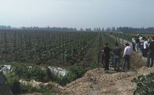 河北:新型农业经营主体数量增至近12.8万家 走上农业现代化发展之路