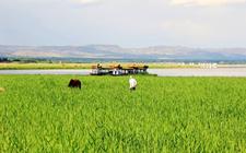 凉城县:加快农业供给侧改革 推进农业健康持续发展