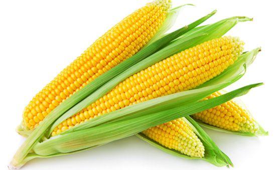 <b>关于玉米生产者补贴的十大疑问解答</b>