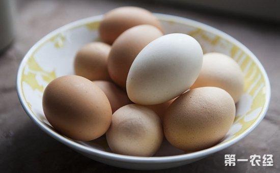 2017年10月10日全国各地区最新鸡蛋价格走势分析