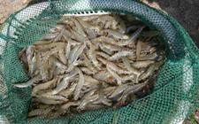 <b>对虾养殖的成本控制</b>