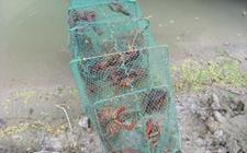 <b>小龙虾渔塘混养管理技术</b>
