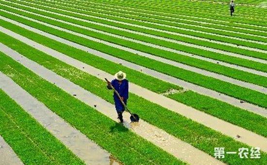 我国新型农业经营主体发展成绩与问题并存