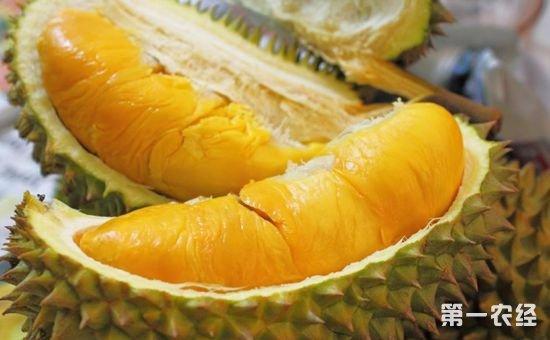 科学家称已破解榴莲基因 其味道系硫化合物的挥发物