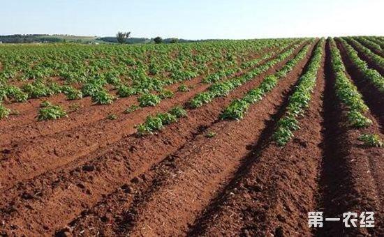 外出务工农民该如何进行土地确权呢?
